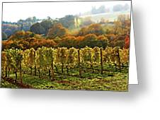 Fall In The Red Hills Of Dundee Greeting Card by Margaret Hood