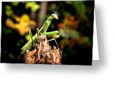 Fall Mantis Greeting Card by Karen M Scovill