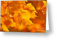 Fall maple leaves Greeting Card by Elena Elisseeva