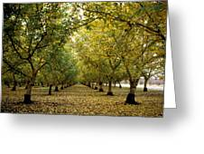Fall Orchard Greeting Card by Kathy Yates