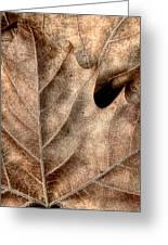 Fallen Leaves II Greeting Card by Tom Mc Nemar