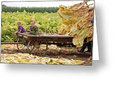 Family Tobacco Harvest Greeting Card by Joyce Huhra