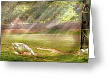 Farm - Geese -  Birds Of A Feather - Panorama Greeting Card by Mike Savad