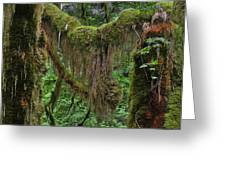 Fascinating Hoh Valley - Hoh Rain Forest Olympic National Park ONP WA USA Greeting Card by Christine Till