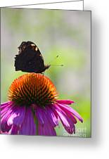 Feel The Summer  Greeting Card by Angela Doelling AD DESIGN Photo and PhotoArt
