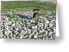Female Killdeer Protecting Nest Greeting Card by Douglas Barnett