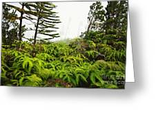 Fern And Norfolk II Greeting Card by Ron Dahlquist - Printscapes