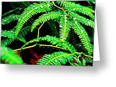Ferns And Raindrops Greeting Card by Thomas R Fletcher