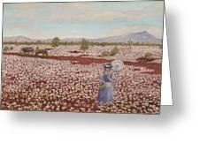 Field of Pink Everlastings Greeting Card by Jocelyn McMath