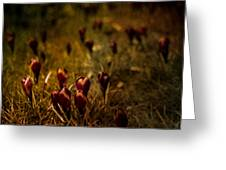 Fields Of Elegance Greeting Card by Loriental Photography