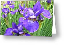 Fields Of Purple Japanese Irises Greeting Card by Jennie Marie Schell