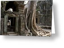 Fig Tree Growing Over Crumbling Ruins Greeting Card by Rebecca Hale