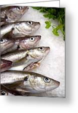 Fish On Ice Greeting Card by Jane Rix