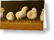 Five Chicks Named Moe Greeting Card by Bob Nolin