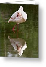 Flamingo Greeting Card by Gert Lavsen
