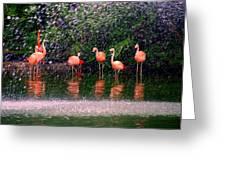Flamingos II Greeting Card by Susanne Van Hulst