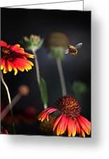 Flight Of A Honey Bee Greeting Card by Joseph G Holland