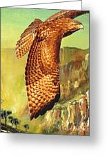 Flight Of The Red Tailed Hawk Greeting Card by Wingsdomain Art and Photography