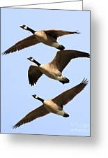 Flight Of Three Geese Greeting Card by Wingsdomain Art and Photography