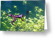 Floating Frog Greeting Card by Nick Gustafson