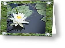 Floating Ivory Greeting Card by Bell And Todd