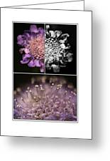 Floralicious  Greeting Card by Bonnie Bruno