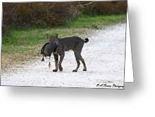 Florida Bobcat Catches An Evening Snack Greeting Card by Barbara Bowen