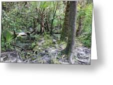 Florida Landscape - Lithia Springs Greeting Card by Carol Groenen