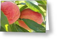 Florida Peaches Greeting Card by Marty  Calabrese