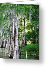 Florida Swamps Greeting Card by Peter  McIntosh
