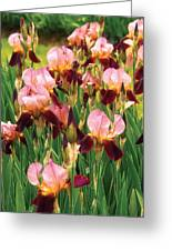 Flower - Iris - Gy Morrison Greeting Card by Mike Savad