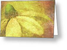 Flower Magnifico Greeting Card by JQ Licensing