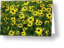 Flower Patch Greeting Card by Timothy Jones