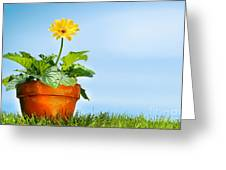 Flower Pot On The Grass Greeting Card by Sandra Cunningham
