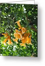 Flowers Greeting Card by Denise Ellis