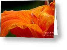 Flowing Greeting Card by Jeannie Burleson