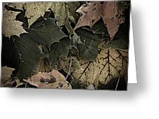 Forest Floor - Leaf 14 Greeting Card by Pete Hellmann