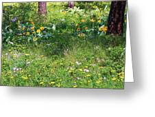 Forest Flowers Landscape Greeting Card by Carol Groenen