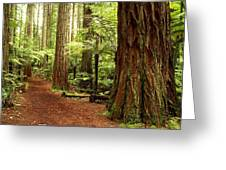 Forest Greeting Card by Les Cunliffe