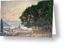 Forest Near St Tropez Greeting Card by Paul Signac