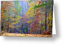 Forest Rainbow Greeting Card by Don Prioleau