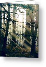 Forest Sunrise Greeting Card by Paul Sachtleben