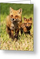 Fox Family Greeting Card by Mircea Costina Photography
