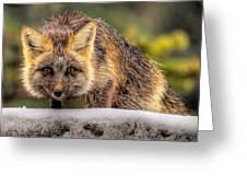 Fox Hunting In The Snow II Greeting Card by Paul W Sharpe Aka Wizard of Wonders