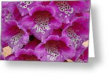 Foxglove Greeting Card by Diane E Berry