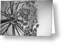 Fractal Flower Photoset 03 Greeting Card by Ryan Kelly