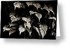 Fronds Greeting Card by Marilyn Hunt