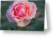 Frosty Rose Greeting Card by Monica Lewis