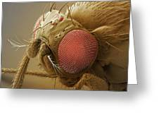 Fruit Fly Head, Sem Greeting Card by Power And Syred