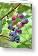 Fruit Of The Vine Greeting Card by Kristin Elmquist